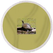 A Turtle Sunning Round Beach Towel