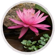 A Waterlily's Grace Round Beach Towel