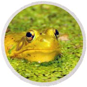 A Yellow Bullfrog Round Beach Towel