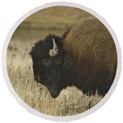 A Yellowstone Bison 9615 Round Beach Towel