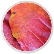Abstract Dogwood In Autumn Round Beach Towel