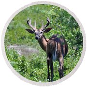 Acadia Buck Round Beach Towel