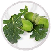 Acorns With Oak Leaves Round Beach Towel