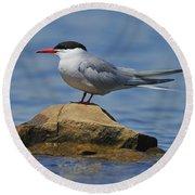 Adult Common Tern Round Beach Towel