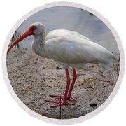 Adult White Ibis Round Beach Towel