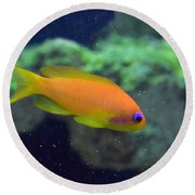 African Anthias Round Beach Towel