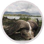 African Cape Buffalo Skull, Ngorongoro Round Beach Towel