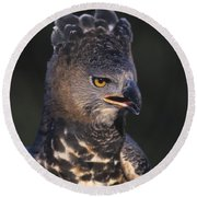 African Crowned Eagle Round Beach Towel