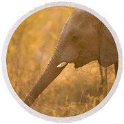 African Elephant Loxodonta Africana Round Beach Towel