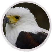 African Fish Eagle 1 Round Beach Towel