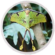 African Moon Moth 1 Round Beach Towel