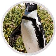 African Penguin Round Beach Towel
