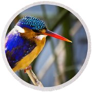 African Pigmy Kingfisher Round Beach Towel