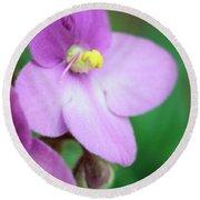 African Violet Flower Round Beach Towel