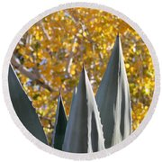 Agave Spikes In Autumn Round Beach Towel
