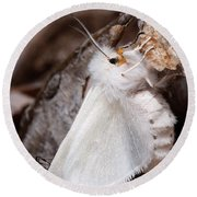 Agreeable Tiger Moth With Ant Round Beach Towel