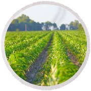 Agriculture- Corn 1 Round Beach Towel
