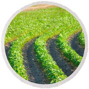 Agriculture- Soybeans 3 Round Beach Towel