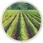Agriculture-soybeans 5 Round Beach Towel