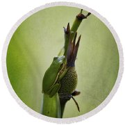 Alabama Green Tree Frog - Hyla Cinerea Round Beach Towel