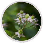 Alabama Wild Blackberries In The Making Round Beach Towel