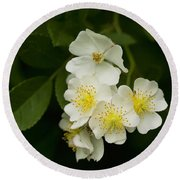 Alabama Wildflower Roses - Rosa Multiflora Round Beach Towel
