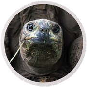Aldabra Tortoise Round Beach Towel