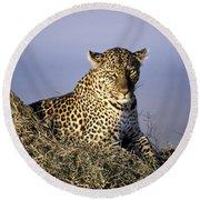 Alert Female Leopard Round Beach Towel