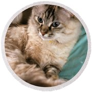 Alert Mixed Breed Round Beach Towel