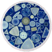 Algae, Fossil Diatoms, Lm Round Beach Towel