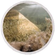 Algae In A Frozen Pond Round Beach Towel by Ted Kinsman