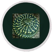 All Coiled Up Round Beach Towel