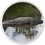 Alligator 1 Round Beach Towel