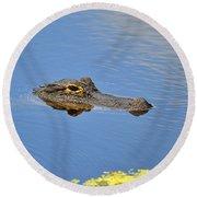 Alligator Afloat Round Beach Towel