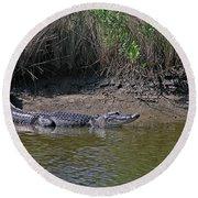 Alligator Round Beach Towel