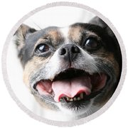 Almost A Jack Russell Round Beach Towel