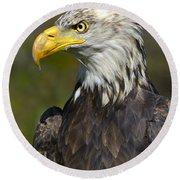 Almost There - Bald Eagle Round Beach Towel