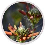 Aloe Vera Blossoms  Round Beach Towel