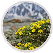 Alpine Meadow  Round Beach Towel