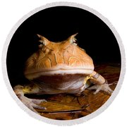 Amazonian Horned Frog Round Beach Towel