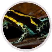 Amazonian Poison Frog Round Beach Towel