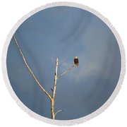 American Bald Eagle - Overlooking Naples Florida Gordon River Round Beach Towel