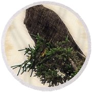 American Bald Eagle In Tree Round Beach Towel