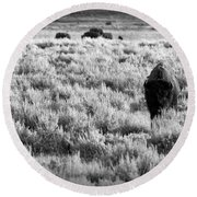 American Bison In Black And White Round Beach Towel by Sebastian Musial