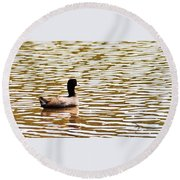 American Coot Floating By Round Beach Towel