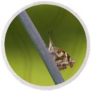 American Snout Butterfly - Libytheana Carinenta Round Beach Towel