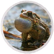 American Toad Croaking Round Beach Towel