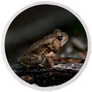 American Toad Round Beach Towel