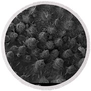 American Toad Skin, Sem Round Beach Towel by Ted Kinsman