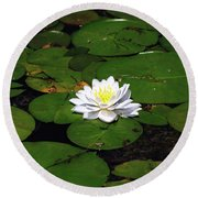 American White Waterlily Round Beach Towel